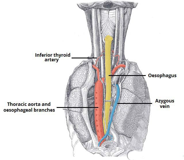 Esophagus Cancer Treatment